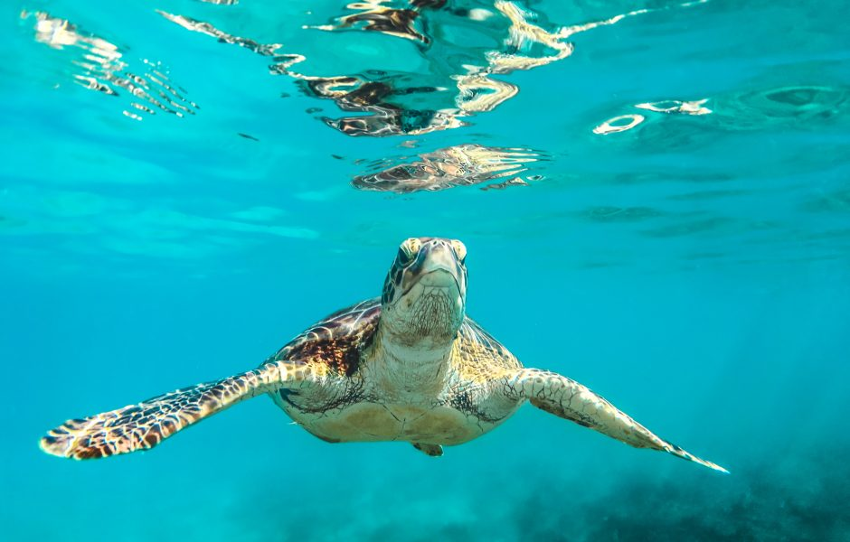 Turtle in water
